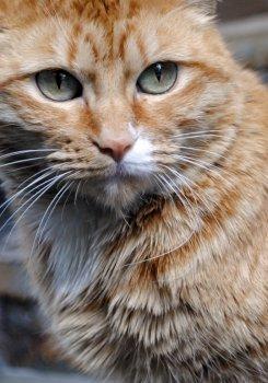 Pisici - 2
