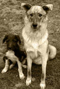 Disciplina canina